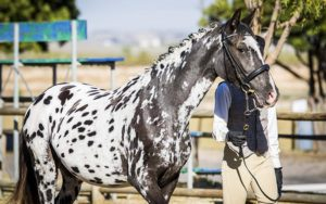 TPAS_horses_category_featured_mares