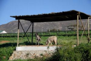 TPAS Farm services Training Schooling Image 02